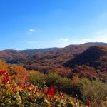春日山の紅葉は今が見頃です
