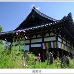般若寺のコスモス