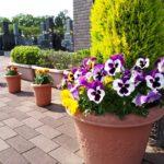 さとやま浄苑の花々