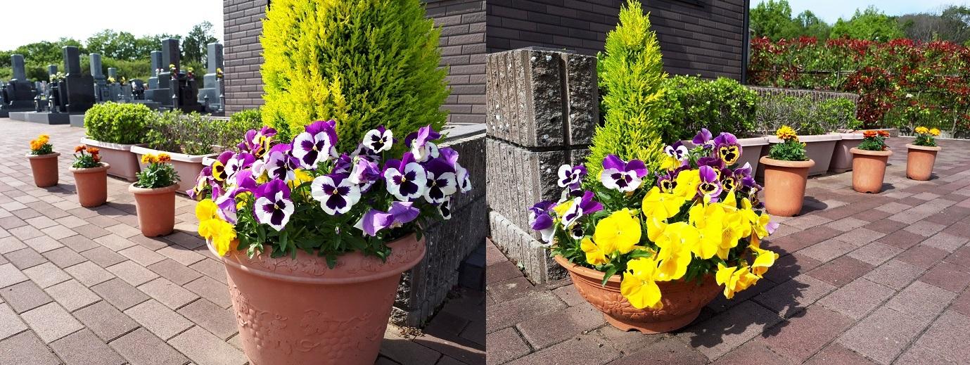 休憩室前の花壇