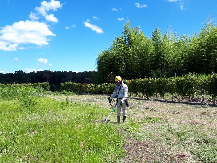 苑内の草刈り作業