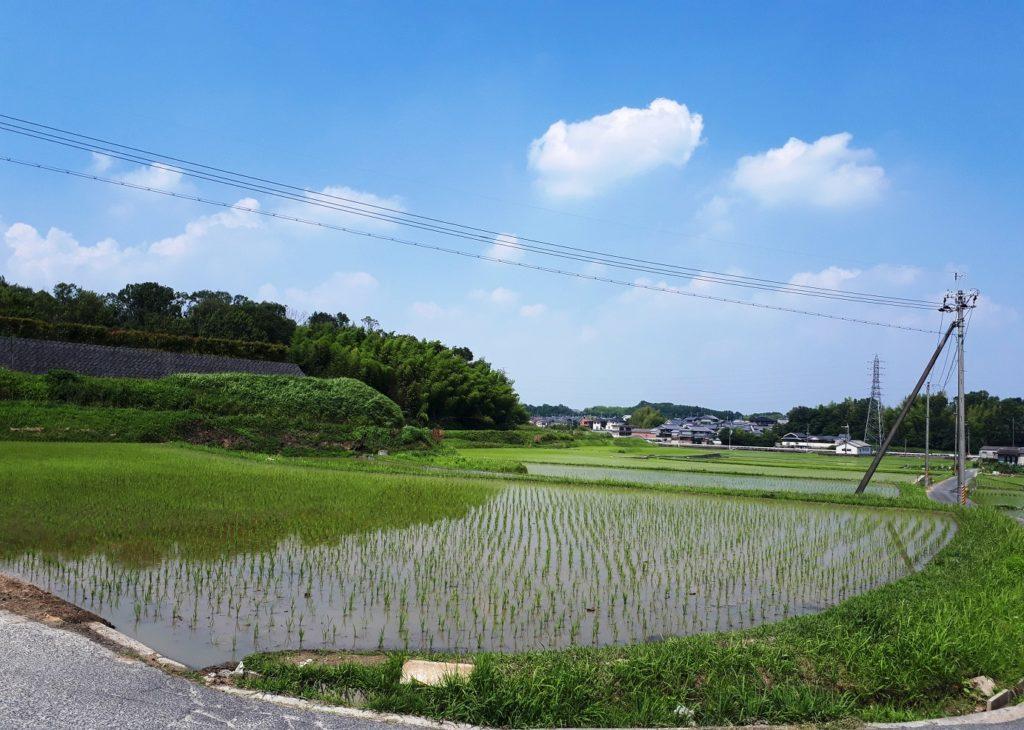 さとやま浄苑周辺の水田