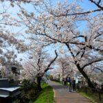 そよかぜ霊園周辺の春の風景