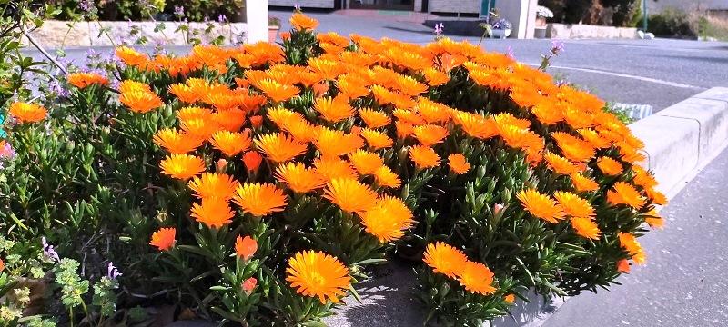 はにゅうの霊園春の花①